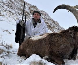 Pamir ibex in Tajikistan.
