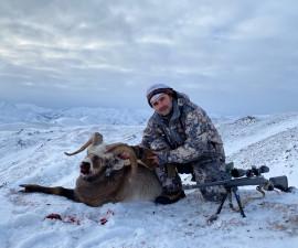 Охотский снежный баран