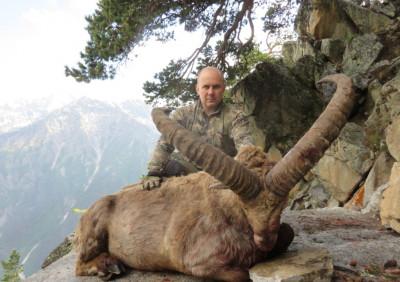Охота на средне-кавказского тура
