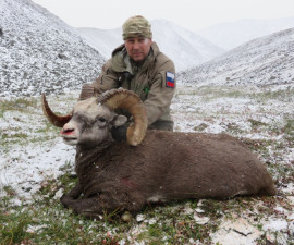 Охота на охотского снежного барана