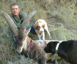 Охота на юго-восточного испанского козерога
