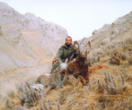 Hitch your wagon to the stars or Kyrgyzstan ibex
