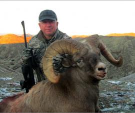 Охота на Корякского снежного барана добытого в Чукотском АО