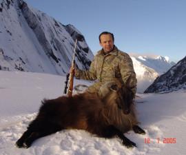 Himalayan Thar In New Zealand